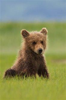 Bears Photo 7