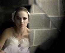 Black Swan Photo 7
