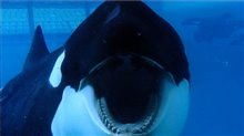 Blackfish Photo 1