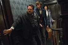 Fantastic Beasts and Where to Find Them Photo 10