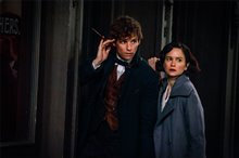 Fantastic Beasts and Where to Find Them Photo 14