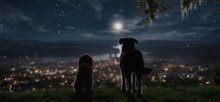 Lady and the Tramp (Disney+) Photo 6