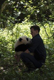 Pandas Photo 23