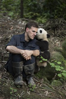 Pandas Photo 26