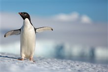 Penguins Photo 1