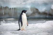 Penguins Photo 7