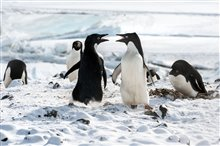 Penguins Photo 8