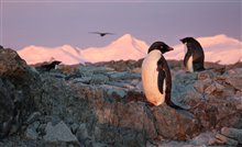 Penguins Photo 10