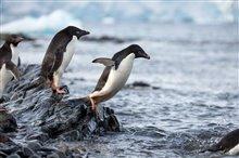 Penguins Photo 12