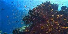 Sea of Life Photo 2