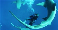 Sharkwater Extinction Photo 3