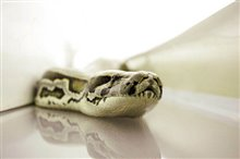 Snakes on a Plane Photo 18