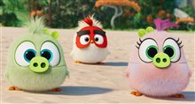 The Angry Birds Movie 2 Photo 7