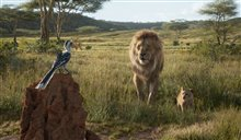 The Lion King Photo 17