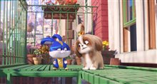 The Secret Life of Pets 2 Photo 12