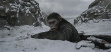 War for the Planet of the Apes Photo 7