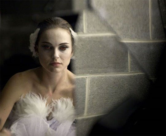 Black Swan Photo 7 - Large