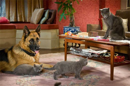 Cats & Dogs: The Revenge of Kitty Galore Photo 8 - Large