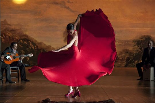 Flamenco, Flamenco Photo 20 - Large