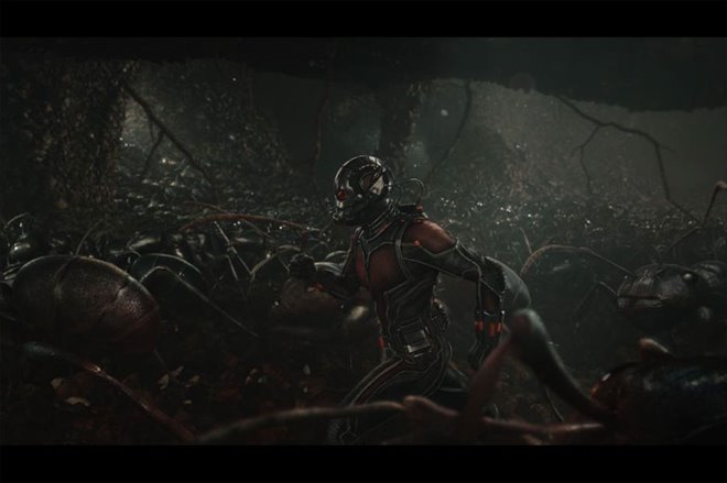 Ant-Man Photo 19 - Large