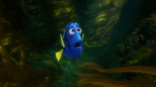 Finding Dory Photo 22 - Large