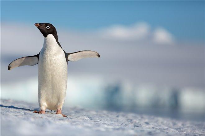 Penguins Photo 1 - Large