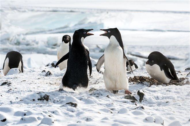 Penguins Photo 8 - Large