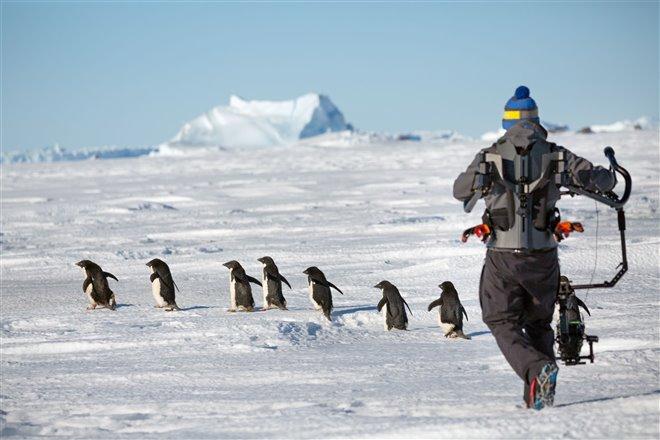 Penguins Photo 16 - Large