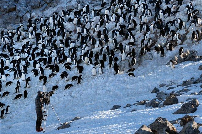 Penguins Photo 18 - Large