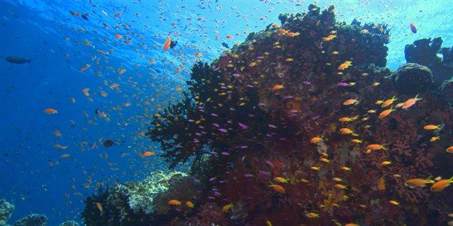 Sea of Life Photo 2 - Large