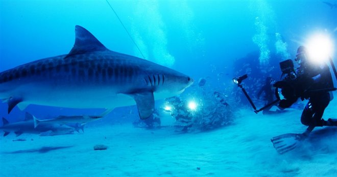 Sharkwater Extinction Photo 13 - Large