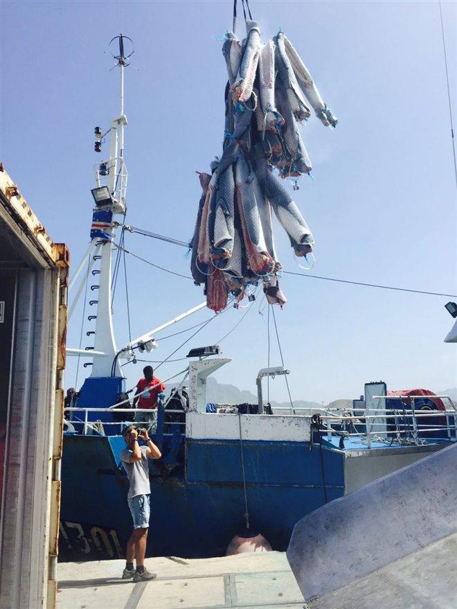 Sharkwater Extinction Photo 29 - Large