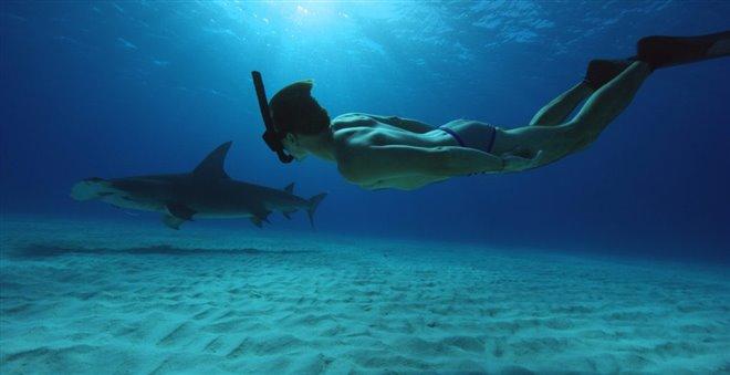 Sharkwater Extinction Photo 18 - Large