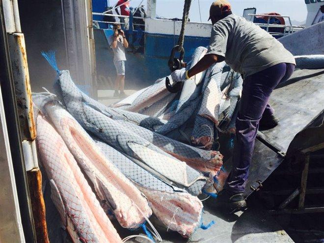 Sharkwater Extinction Photo 20 - Large