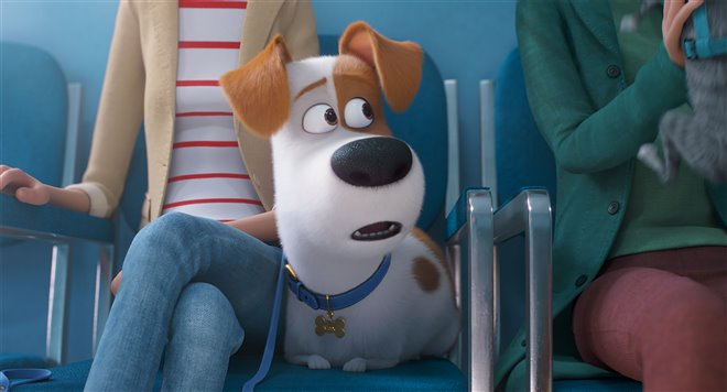 The Secret Life of Pets 2 Photo 16 - Large