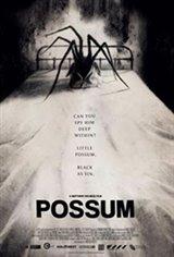 Possum Large Poster