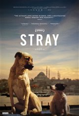 Stray Movie Poster