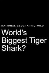 World's Biggest Tiger Shark? Large Poster