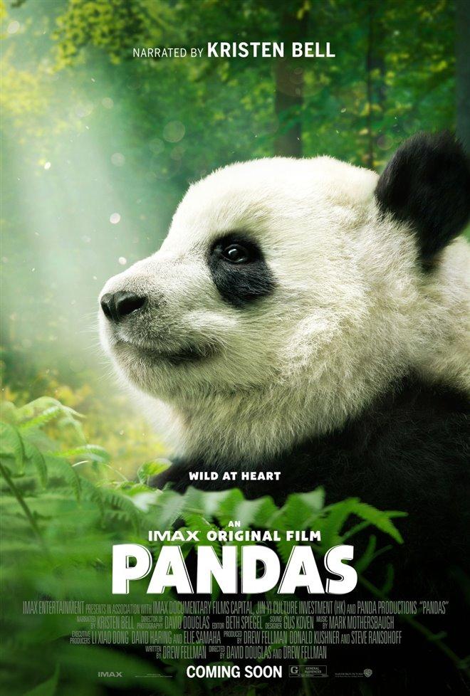 Pandas Large Poster